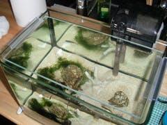 Y 様 水槽の天板ガラス