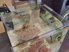 W 様  水槽の天板ガラス